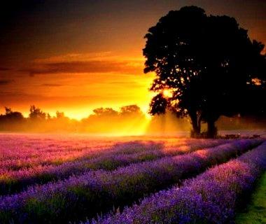 Lavender Sunset, Provence France