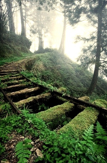 Moss Covered Railroad Tracks, Taiwan