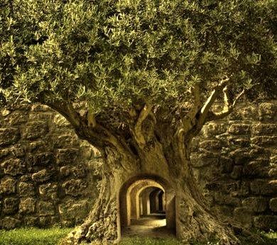 Mystery Tree, Sweden photo manipulation by Thorleif Johansson