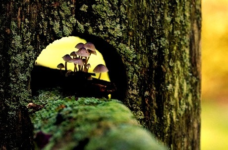 Mushroom Fence, Wayne, Pennsylvania