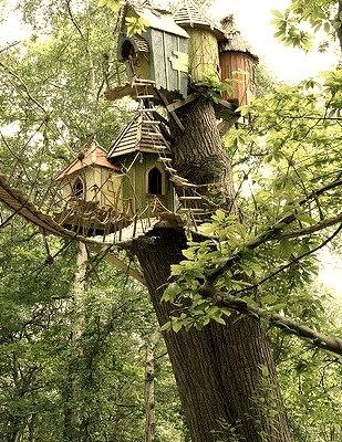 Treehouse, Norfolk, Virginia