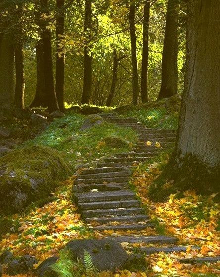 Forest Path, Ukraine