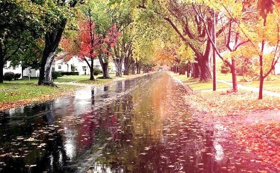 Autumn Rain, Chatsworth, Illinois