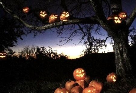 Pumpkin Tree, Sleepy Hollow, New York