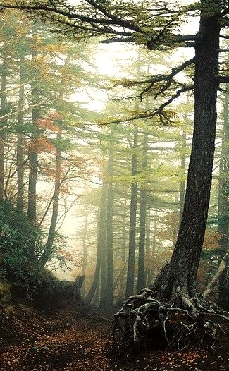 Aokigahara, the forest at the bottom of Mt. Fuji, the top suicide area in Japan. Over seventy-eight bodies have been discovered, supposedly confining the spirits of these individuals to forever haunt...