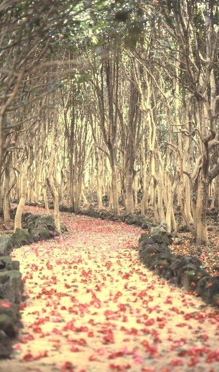 Flowered Petals Path, Hagi, Japan