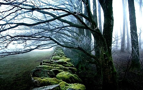 November Forest, Cumbria, England