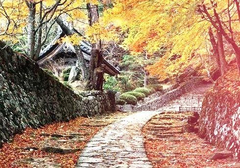 Autumn Cottage, Sakura, Japan