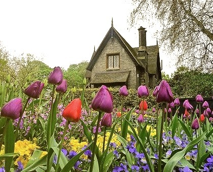 Purple Roses, Hyde Park, London, England