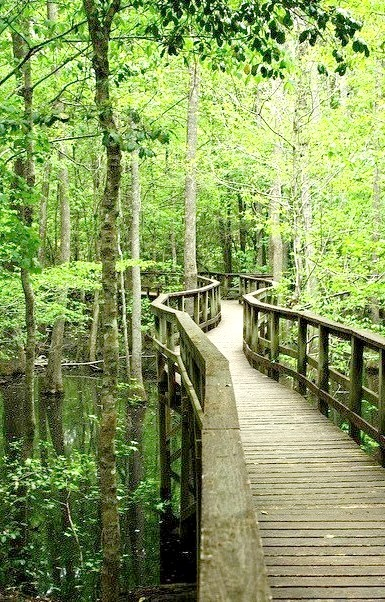 The way through the marshes, Congaree National Park / USA